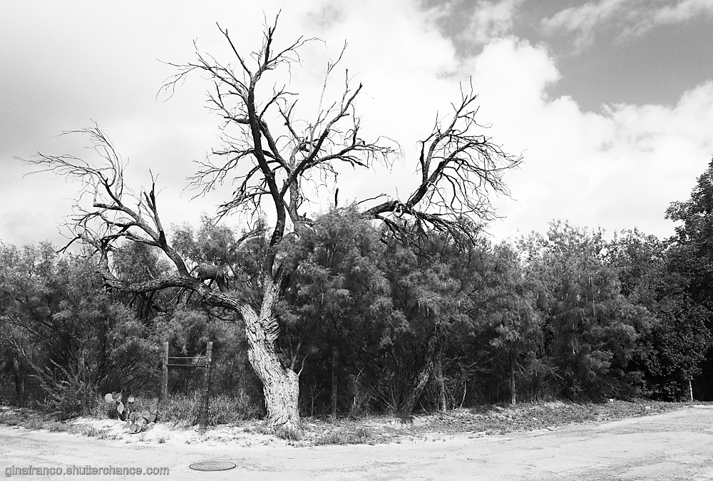 photoblog image Tree, No Body